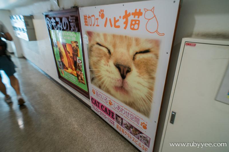 ハピ猫 | www.rubyyee.com