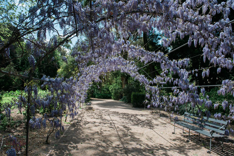 Adelaide Botanic Gardens | www.rubyyee.com
